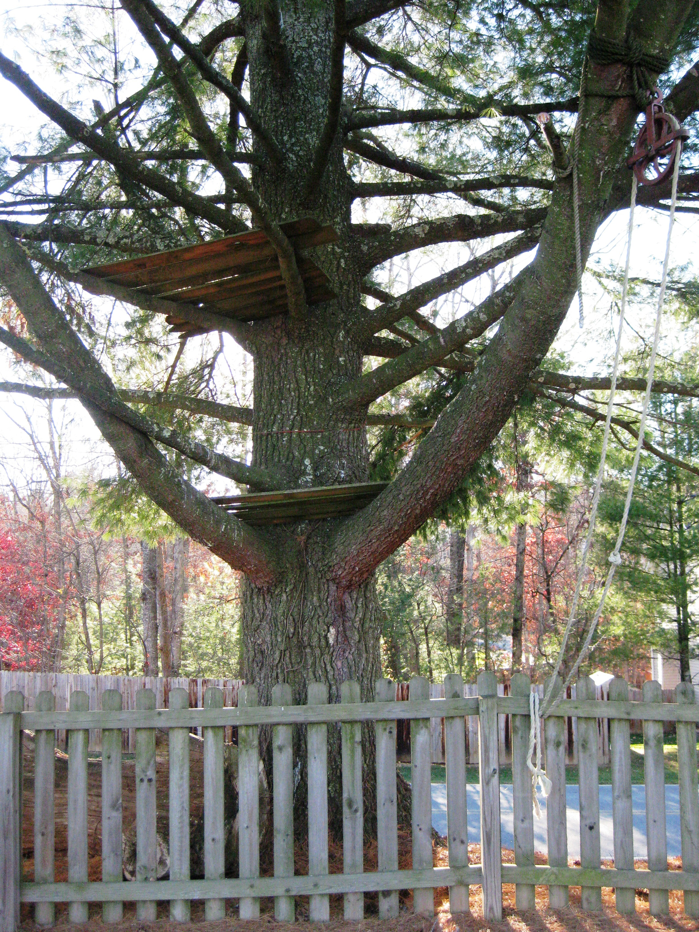 old-treehouse.jpg