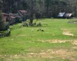 32_rhett_dr___rollison_025_pasture.jpg